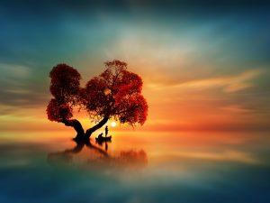 Fishing the sun under a beautiful tree