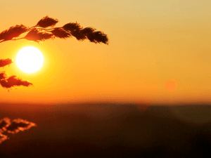 Wild grass in nature on a sunset background