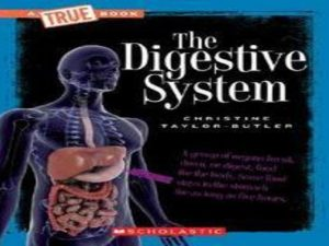 The Digestive System (The Human Body)