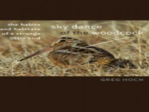 Sky Dance of the Woodcock: The Habits and Habitats of a Strange Little Bird